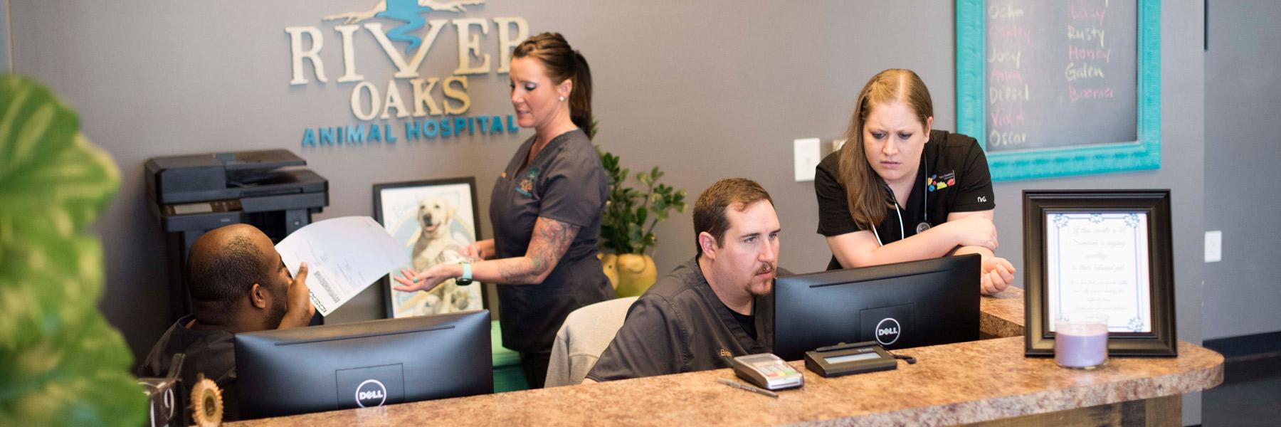 Best Veterinarian In Myrtle Beach